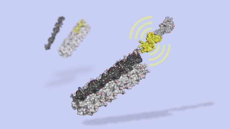 Изкуствен протеинов превключвател за интелигентни клетъчни терапии | ✅ Д-р Стоян Арнаудов - Ортопед | Травматолог ⭐️